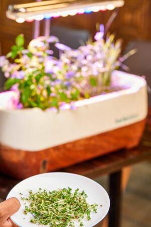 plant leaves on plate