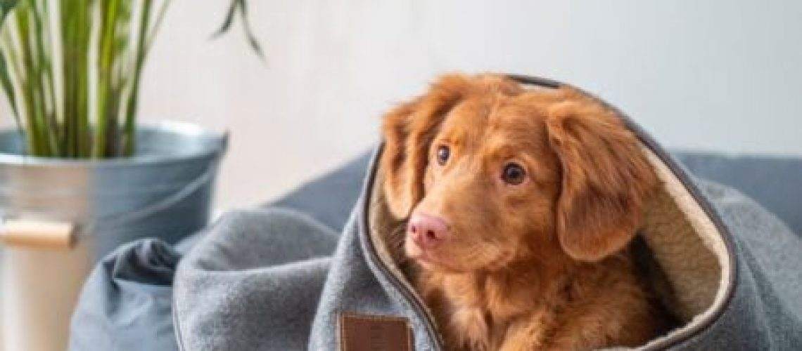 brown short coated dog on gray textile