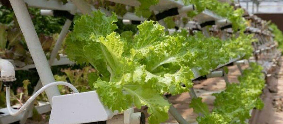 hydroponics-4255403_640
